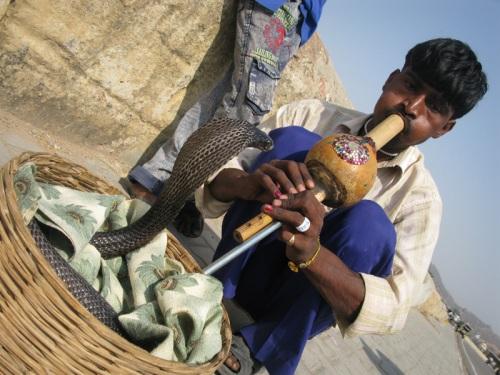Snake Charmer - Jaipur, India