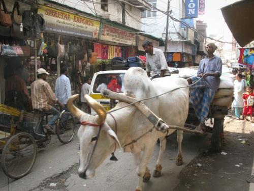 Pahar Ganj, Delhi - Courier